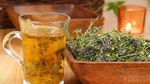 Какие травы эффективны при трахеите
