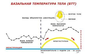 Норма температуры тела перед месячными